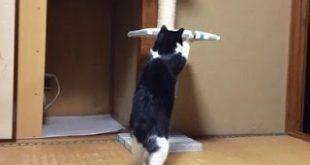 2Practice-of-Cat-Tower