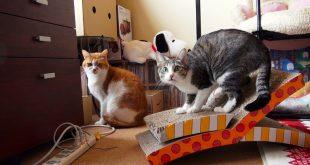 A-Broken-Cat-Scratcher-