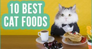 Best-Cat-Food-2016-TOP-10-Wet-And-Dry-Cat-Foods