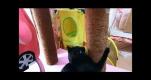 Black-cat-which-plays-like-a-monkey-at-a-homemade-cat-tower.