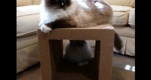 Cardboard-Cat-Scratcher-Cube-by-Kittyblock-Review-Floppycats