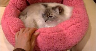 Cat-Beds-Designer-Urban-Paw-Luna-Cuddler-in-Sherpa-Fuschia-Review-Video-Floppycats