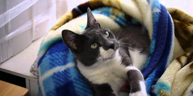 Cat-Beds-cat25