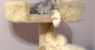 Cat-Falls-Off-Cat-Tower