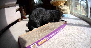 Cat-Loves-Smarty-Kat-Super-Scratcher-Catnip-Board