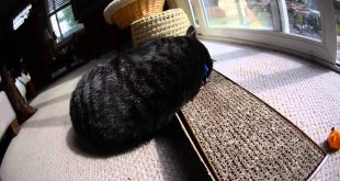 Cat-Makes-Love-to-his-Smarty-Kat-Super-Scratcher-with-Catnip