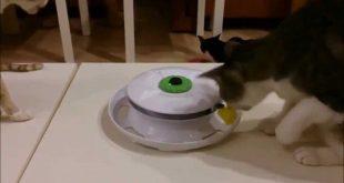 Cat-accessories-user-trial-WANTi