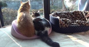 Cat-beds-but-became-a-two