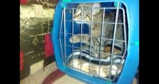 Cat-escape-from-his-cage-
