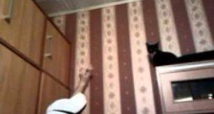 Cat-jumping-over-furniture-Kot-skacze-po-meblach