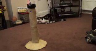 Cat-laser-tower