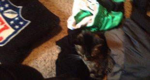 Cat-sleeps-on-my-clothes