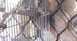Cat-trying-to-get-a-bird-in-cage