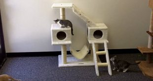 Cats-Playing-on-Kitty-Mansions-Alaska-Cat-Condo
