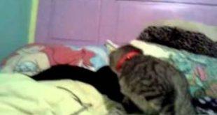 Cats-just-got-bell-collars