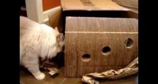 Cozy-Cat-Furniture-The-Original-Catpods-Arrives-for-Product-Testing-Floppycats