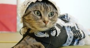 Cute-and-the-cat-of-your-clothes-in-the-Gothic.
