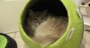Designer-Cat-Beds-Lollycadoodle-Wool-Cat-Beds-from-The-Cat-Connection-Floppycats