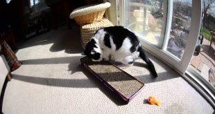 Dog-Sneeze-Ruins-the-Fun-of-a-Catnip-Smarty-Kat-Cat-Scratcher