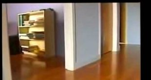Funny-Cats-Stealing-Dog-Beds-Compilation-2015