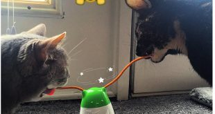Funny-cat-toy-review