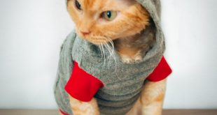 Funny-cats-refusing-to-wear-clothes-and-cant-walk