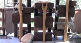 How-To-Build-a-Six-Foot-Cat-Tree.