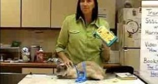 How-to-Train-a-Cat-Use-Training-Accessories-to-Promoting-Good-Cat-Behavior