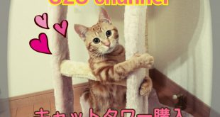 I-bought-a-cat-tower..UZU-channel