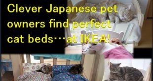 Japanese-Cat-Owners-Turn-IKEA-Doll-Beds-Into-Adorable-Cat-Beds-1