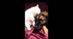 LUCY-Licks-Stuff-Cat-Video