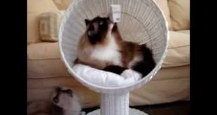 Modern-Cat-Furniture-The-Refined-Feline-Kitty-Ball-Cat-Bed-Floppycats