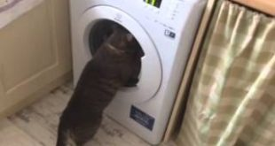My-stupid-cat-chasing-clothes-in-the-washing-machine-XD