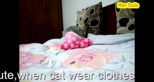 New-funny-cati-love-wear-new-clothesso-cute-2