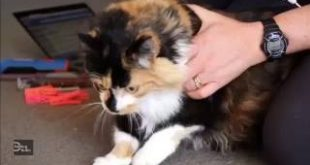 Pet-groomer-Chrissy-uses-clothes-pegs-to-calm-her-cat-clients-before-giving-them-a-tidy-up.