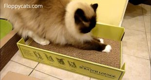 Ragdoll-Cats-Review-The-Scratch-Lounge-Cardboard-Cat-Scratcher-Floppycats