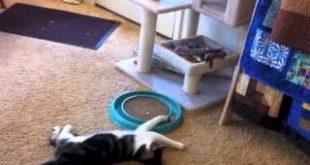 Reacher-and-Bergan-Turbo-Scratcher-Cat-Toy