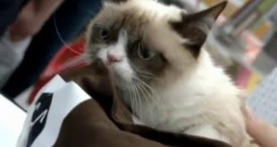 Real-Life-Grumpy-Cat-is-set-to-star-in-a-movie