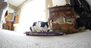 Smarty-Kat-Cat-Scratcher-Makes-Cats-Crazy