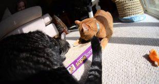 Smarty-Kat-Catnip-Cat-Scratcher-is-Better-Than-Fish
