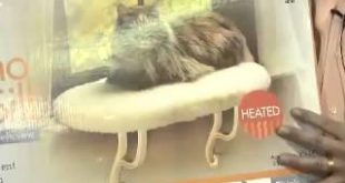 Thermo-Kitty-Sill-Heated-Cat-Window-Perch-by-KH