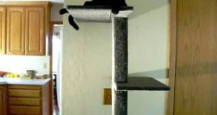 Tips-About-Cats-Furniture-Staring-Jack-the-Cat-002.MOV