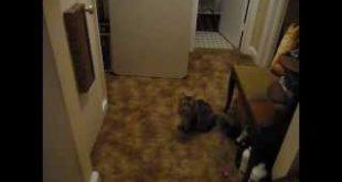 Wall-Cat-Dancer-with-Scratcher-PT-1