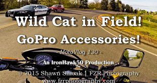 Wild-Cat-in-Field-GoPro-Accessories-DR650-MotoVlog-130