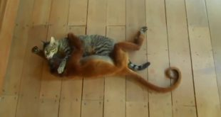 cute-monkey-and-cat