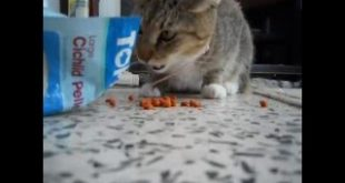 my-cat-loves-fish-food