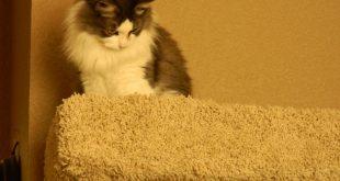 Project: Cat Condo Construction!